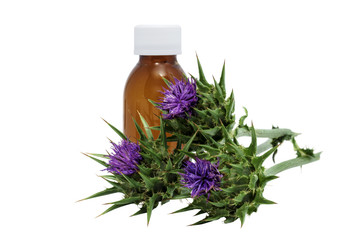 Milk thistle ( Silybum marianum ) with medical flask