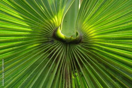 canvas print picture Palmblatt