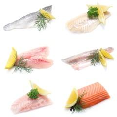 Collage Fisch