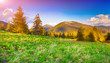 Colorful morning landscape in Carpathian mountains.