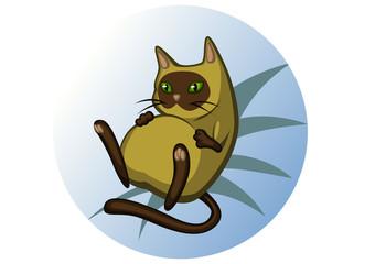 fat_siamese_cat