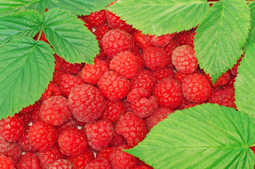 Raspberries decorated with green leaf as background