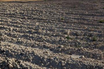 Terre labourée, sillons