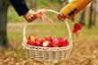 lovers, picnic basket