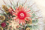 close up of red cactus flowers petal