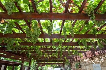 Vineyard on the island of Crete, Greece.