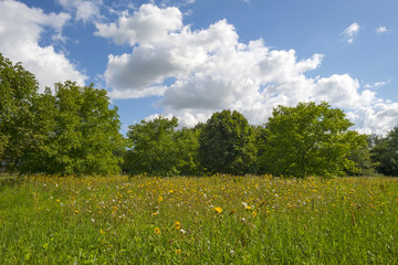 Wild flowers in a sunny field with trees