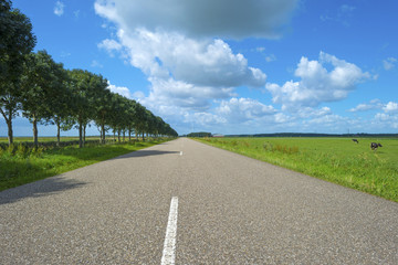 Road through a countryside in summer