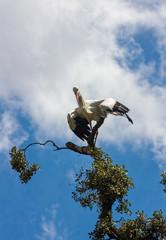 storks on a tree