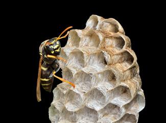 Small wasp 7