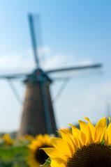 風車とひまわり畑