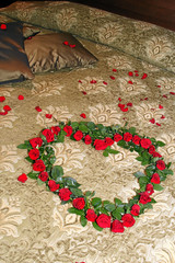 Petals of roses on a  honeymoon bed