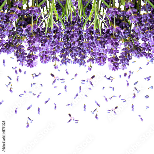 Deurstickers Lavendel lavender flowers isolated on white. floral background