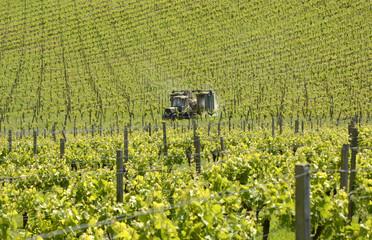 Tractor spraying vineyard. Surrey. England