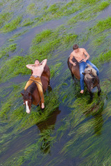 Two friends have a rest, on grain of horses standing in water