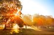 Obrazy na płótnie, fototapety, zdjęcia, fotoobrazy drukowane : Sunset in autumn park.