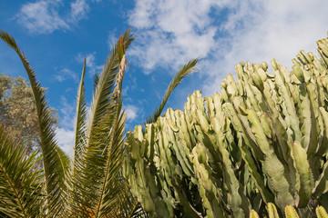 Cactus tree at summer