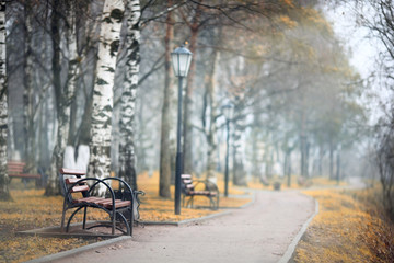 city alley autumn bench loneliness