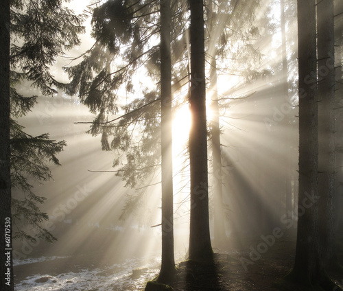 canvas print picture Sonnenstrahlen im Morgennebel