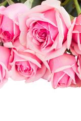border of fresh pink garden roses