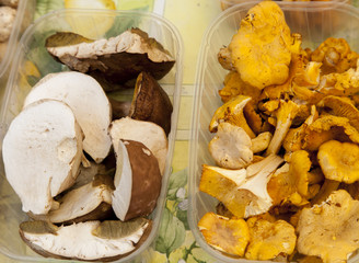Porcini, Boletus edulis and chanterelle mushrooms