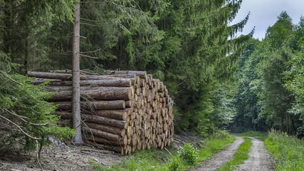 Holzstämme an einem Forstweg