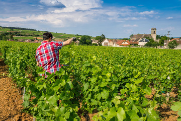 viticulteur bourguignon