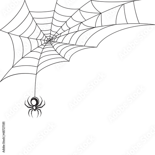 Fototapeta Spider web wallpaper