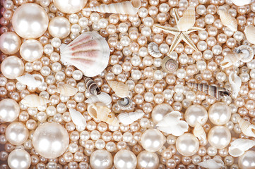 the background of pearls and marsih shells
