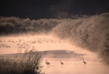 川の中の鶴たち
