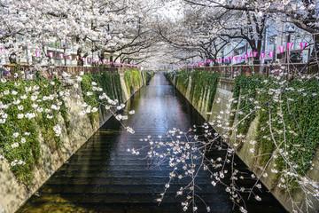 Meguro Canal in Tokyo, Japan