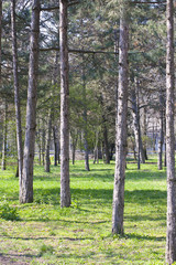 forest  with green grass