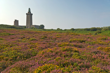 Colorful field of purple and yellow flowers with lighthouse in t