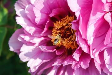 A bee approaching a flower