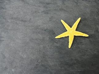 étoile de mer sur ardoise grise