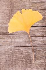 Ginkgo leaf over wooden surface