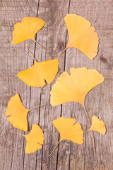 Ginkgo leaves over wooden surface
