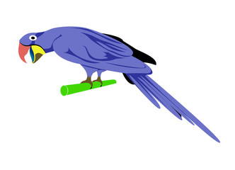 Cartoon animal ,Parrot