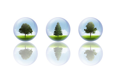 Arbre en bulle B