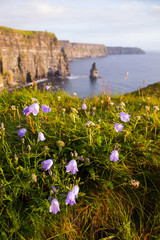 Cliffs of Moher with Wild flowers.