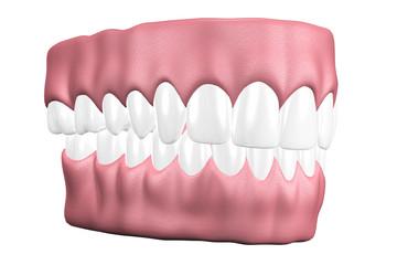 3D teeth close up.