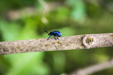 insects blue