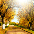 canvas print picture - Autumnal nature, alley