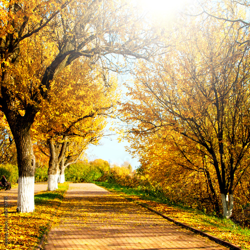 canvas print picture Autumnal nature, alley