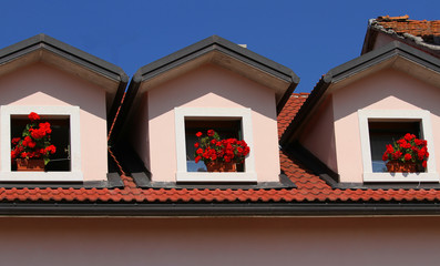 three pots of Geraniums on the three Windows of the House