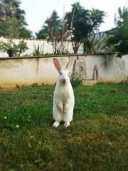 Coniglietto bianco in piedi