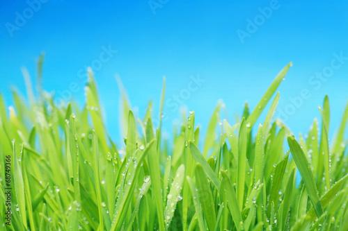 canvas print picture gras mit blauem himmel