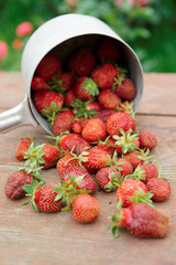 Strawberries spilled from a pot