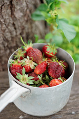 Strawberry crop