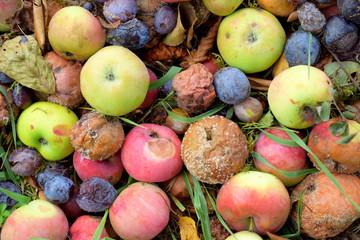 Komposthaufen - Äpfel